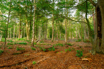 Mixed Woodland 2