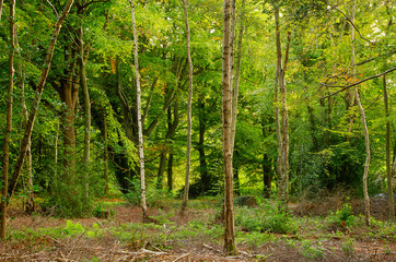 Mixed Woodland 4