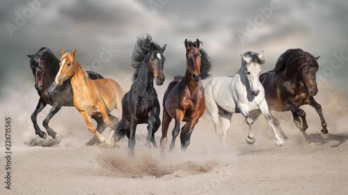 Wall mural Horses run gallop free in desert dust against storm sky