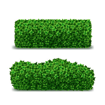 Realistic Detailed 3d Green Hedges Set. Vector