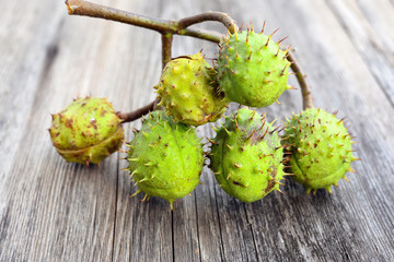 Branch of chestnuts on old wooden background