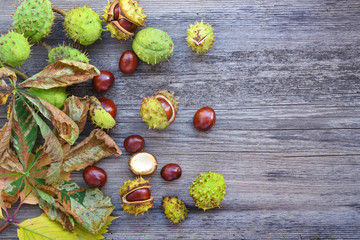 Chestnut with dry leaves on old wooden background with copy space for your text. Top view