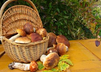 Obraz Świeżo zebrane borowiki wokół wiklinowego kosza pełnego grzybów, w tle żółte, drewniane deski - fototapety do salonu