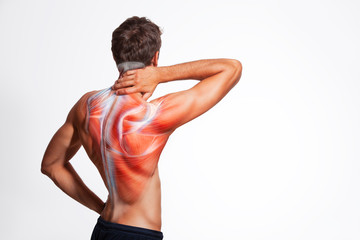 Man's back muscle and body structure. Human body view from behind isolated on white background. Fototapete