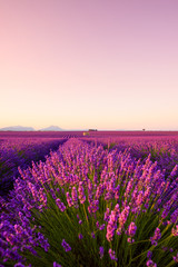 Provence lavender field with house at sunrise