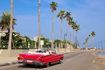 Havana, Red Old Car, Palm, Road
