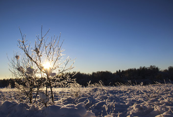 Nature, landscape, Christmas concept - beautiful winter landscape with snow-covered tree under sunlight at sunset against the snow plain. Snowy spruce, sunny winter day. Winter background.