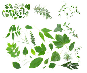 Collage of green leaves