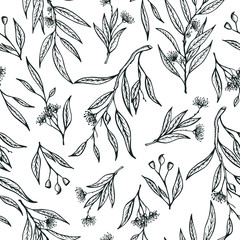 Vector eucalyptus hand drawn illustration.Seamless pattern with eucalyptus flowers.Healing and cosmetics herb.Medical plant. Great for traditional medicine design. Great design for natural and organic