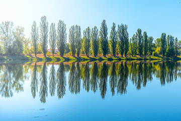Alley of lush green poplar trees reflected in the water on sunny summer day.