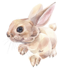 Hand painted watercolor. Cute bunny illustration.