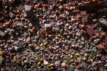 Acorns in stones