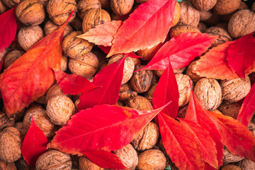 Red leafs and walnuts