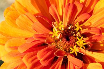 Macro Orange Blume