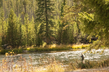 fisherman on the madison river in autumn