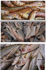 Balık fotoğraflarımdan meydana gelmiş kolaj