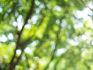 The natural blur background with beautiful shape green bokeh from the forest tree