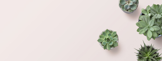 Türaufkleber Pflanzen succulents banner or header with different plants on a soft blush / pink background, flat lay / top view, copyspace for your text