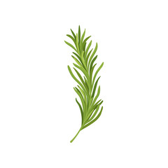 Sprig of green rosemary. Fresh herb used in culinary. Organic ingredient for flavoring dishes. Flat vector design