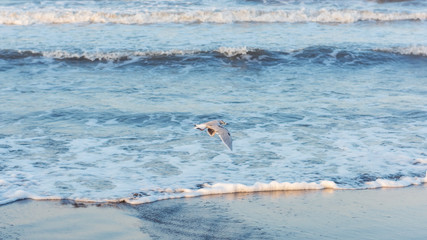 Seagull flying over the seashore