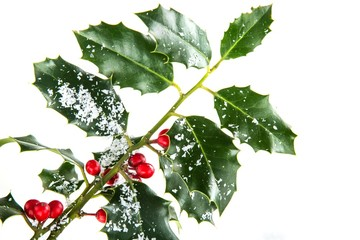 Sprig of Holly with Artificial Snow