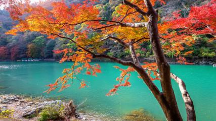 Fototapete - Arashiyama in autumn season along the river in Kyoto, Japan.