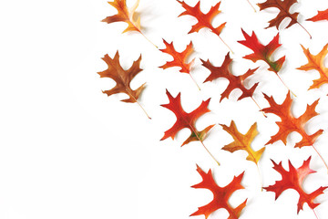 Set of colorful oak leaves on white table background. Modern autumn styled composition, botanical pattern. Fall design. Decorative corner, web banner. Flat lay, top view.