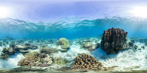 Coral head in GBR