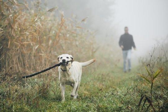 Man walking with dog in autumn fog.