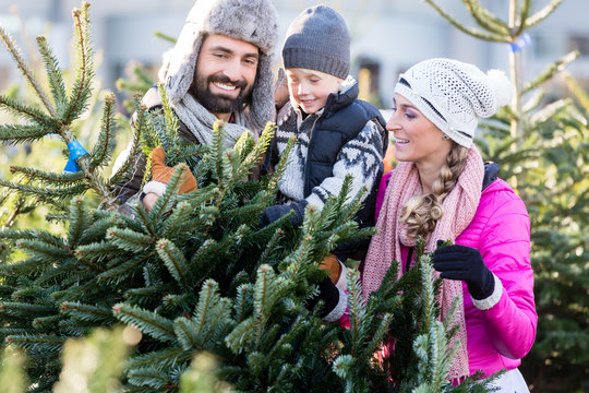 Family buying Christmas tree on market taking it home