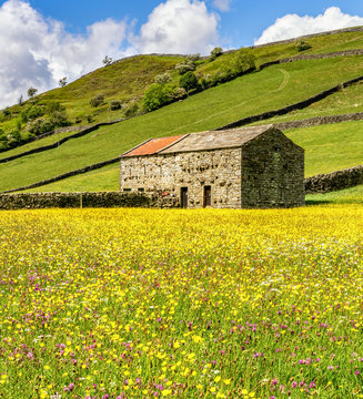 Wild flowers in the meadows at Muker, in Swaledale.