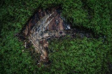 Schnitzeljagd Pfeil in Baum geschnitzt