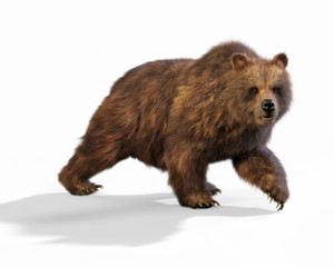 Large brown bear walking on an isolated white background. 3d rendering
