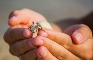 Tiny hermit crab in hands, macro shot