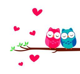 sweety owl