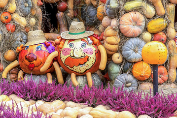 Pumpkins with pictures on the backgrounds pumpkins of different shapes and sizes.