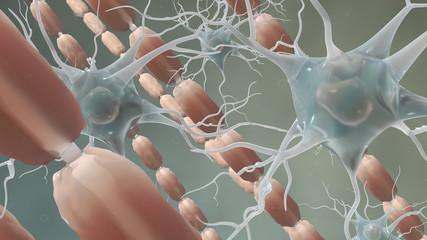 Myelin Sheath and neurons brain cells