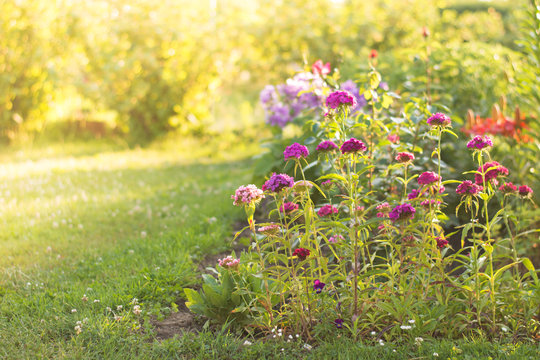 Flowers in a spring garden at sunrise