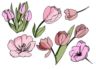 Tulip flowers in vector isolated on white