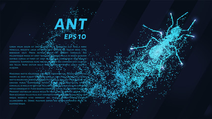 Ant of the particles. The ant consists of small circles