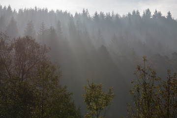 Forest in the backlight with fog