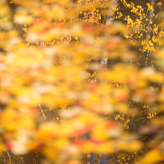 Abstract autumnal backgrounds for your design.