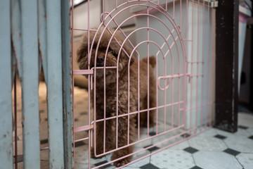 A cute dog in Tainan, Taiwan.