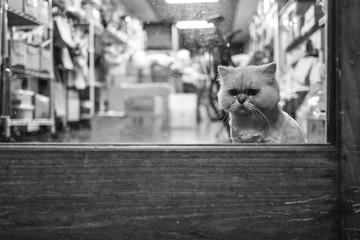 A cat in a cafe in Tainan, Taiwan.