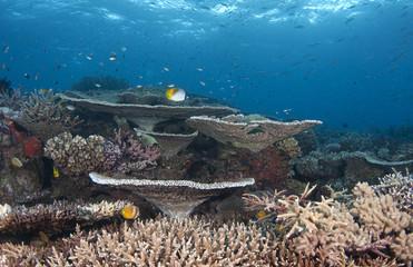 Healthy coral reef, Australia