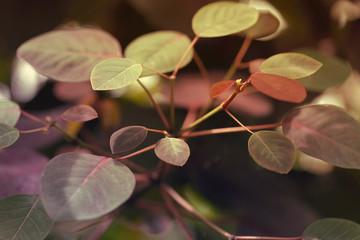New leaf growth in spring.