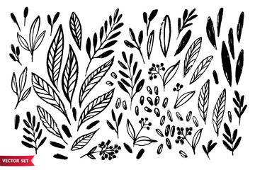 Vector set of hand drawing wild plants, herbs and berries, monochrome artistic botanical illustration, isolated floral elements, hand drawn illustration.