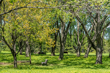 City park. Spring Nature. Beautiful Landscape. Park with Green Grass and Trees.
