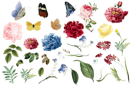 Various romantic flower and leaf illustrations