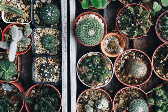 top view of various succulent and cactus plant growing in the pots on the old wooden tray at home garden. selective focus, vintage photo and film style